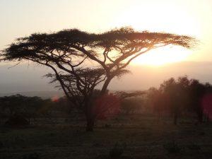 Beseda Afrika v románech H.H
