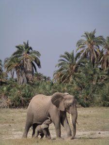 Beseda Afrika v románech H.H.1JPG